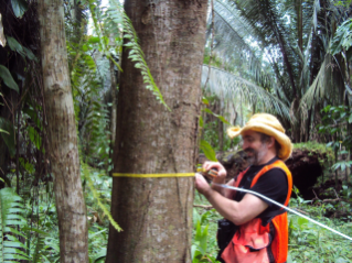 CMI researcher Eric Wolf measures trees. This information is used to calculate how much carbon the forest contains and will store in the future.